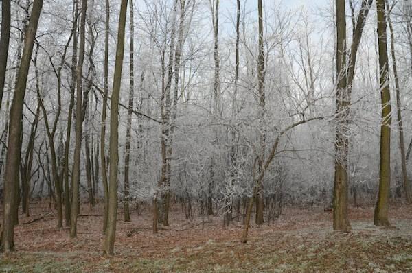 via gaggio innevata galaverna inverno lonate pozzolo