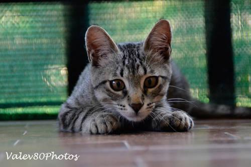 Giornata mondiale del gatto (inserita in galleria)