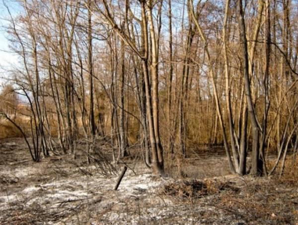 Incendio a Monvalle, cosa resta del canneto (inserita in galleria)