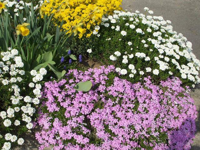 Ad Avigno è primavera