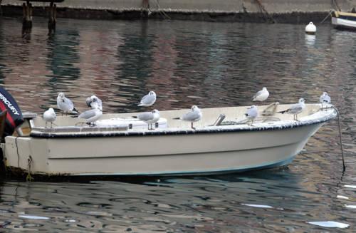Gabbiani in attesa