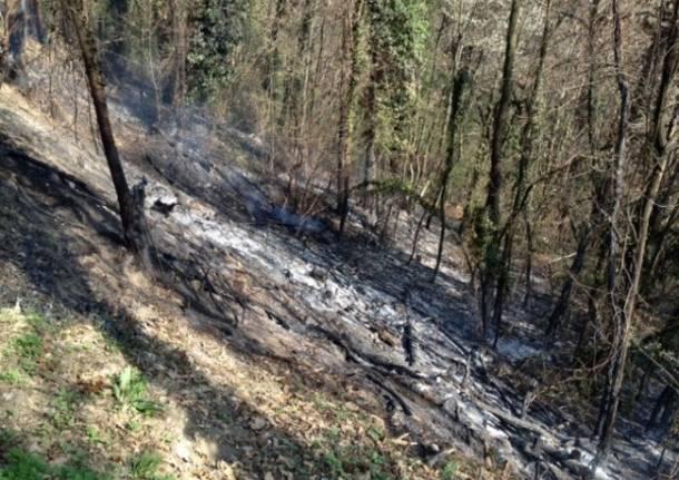 Incendio boschivo a Casale Litta (inserita in galleria)