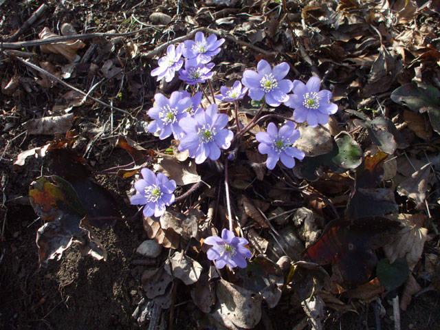 Primavera precoce
