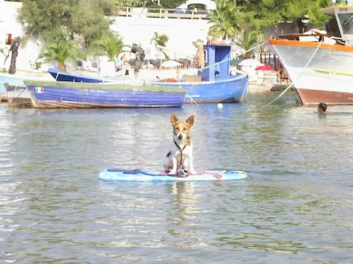 ZEBEDEO FA SURF