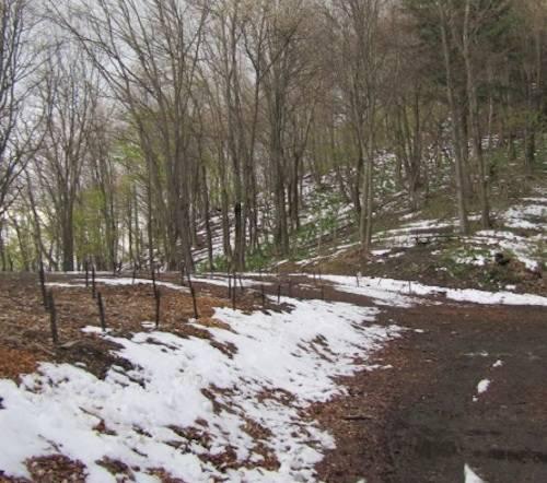 25 aprile 2012 - neve al Campo dei Fiori