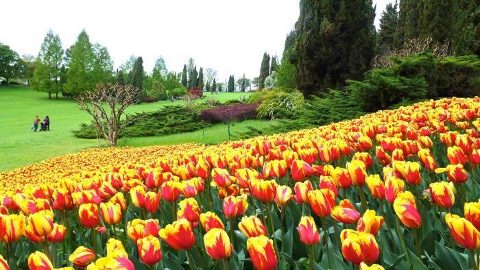 Qualche tulipano al Parco Sigurta