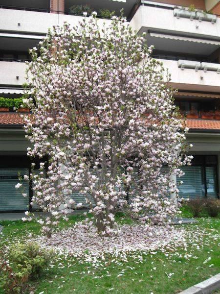Spring in BA