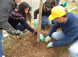 Studenti del liceo Curie piantano 80 grandi tigli (inserita in galleria)