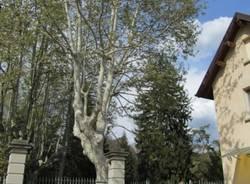 Tra gli alberi di Varese (inserita in galleria)