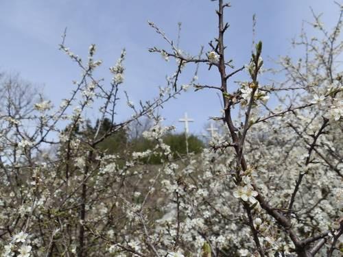 Tre Croci di Primavera