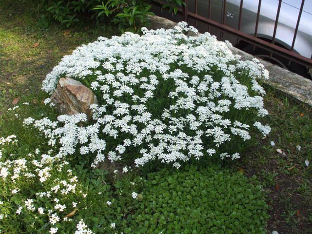 Un bel cuscino di fiori