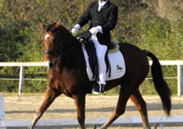 dressage equitazione paralimpico