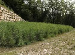 A Castello Cabiaglio la depurazione naturale (inserita in galleria)