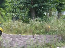 Guerrilla gardening a Ponte Tresa (inserita in galleria)