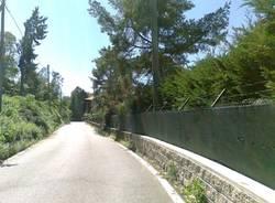 Alberi caduti tra Laveno e Castelveccana (inserita in galleria)