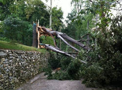 alberi cazzago brabbia tempesta