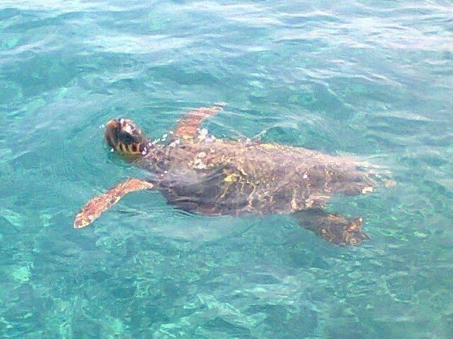 Boccata d'aria per la tartaruga