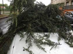 Dopo la tempesta, un ramo piomba nell'abitacolo (inserita in galleria)