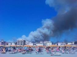 Incendio nella pineta di Marina di Grosseto (inserita in galleria)