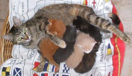 Isi la gatta straordinaria, e i suoi 5 gattini Attila, Aurelia, Augusto, Agrippina, e il rosso Foxi.