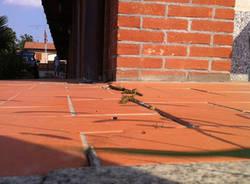 Pericolo in campo a Carnago (inserita in galleria)