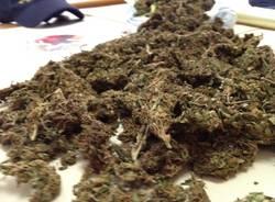 Sequestro marijuana a Casciago (inserita in galleria)