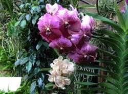 Orchidee a Ville Ponti (inserita in galleria)