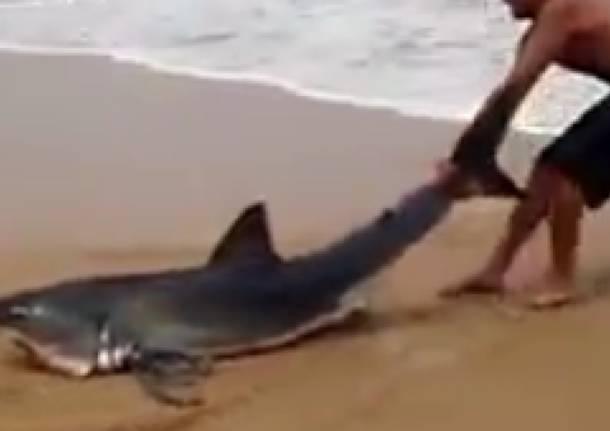 Surfista aiuta uno squalo in difficoltà