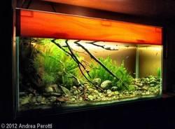 Andrea Perotti, campione di acquari d'acqua dolce (inserita in galleria)