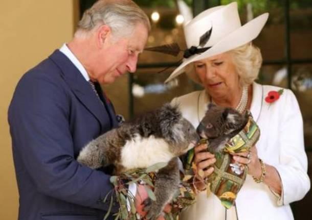 Carlo e Camilla alle prese coi koala