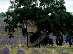 Case sugli alberi (inserita in galleria)