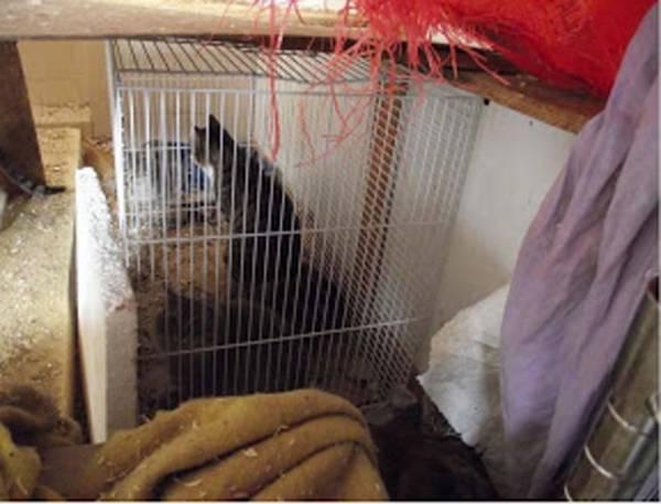 """25 gatti """"rinchiusi"""" in pessime condizioni (inserita in galleria)"""