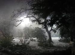 Accesa la sequoia di Natale (inserita in galleria)