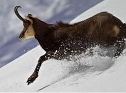 Arriva la neve, attenzione agli animali (inserita in galleria)