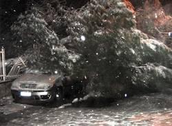 Auto schiacciata da un albero (inserita in galleria)