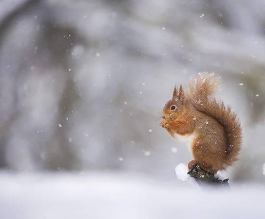 Gli animali e la neve (inserita in galleria)