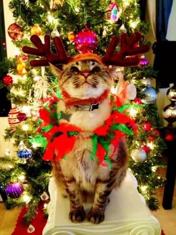 I gatti di Natale (inserita in galleria)