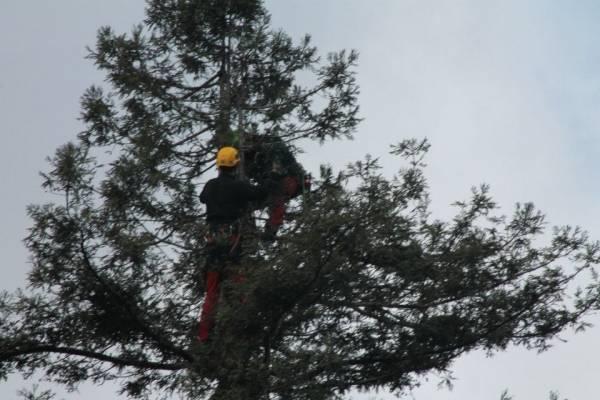 Maxi sequoia di Natale con 7mila luci (inserita in galleria)