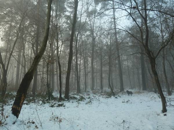 Una passeggiata nel bosco (inserita in galleria)