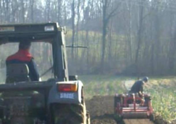 broggini crugnola agricoltura agricoltori