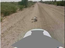 Google e l'asino africano (inserita in galleria)