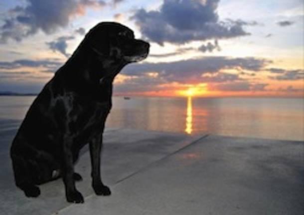 cane foto vincitore lettore