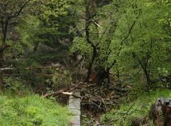 Ecco la frana della Val Veddasca (inserita in galleria)