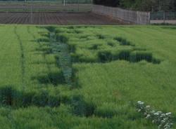 Strane forme nel campo di grano (inserita in galleria)