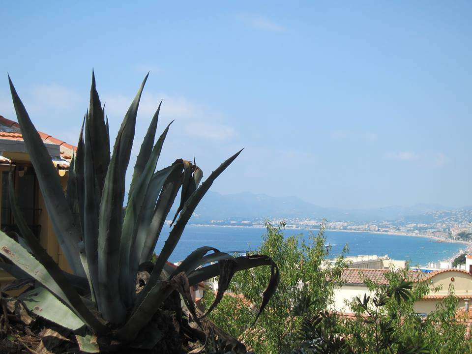 Agave a mare