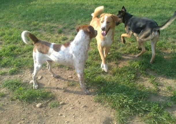 I cani del canile di Gallarate (inserita in galleria)