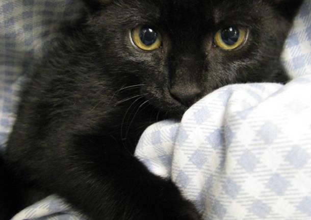 La Giornata del Gatto Nero: ecco le foto dei vostri bellissimi mici