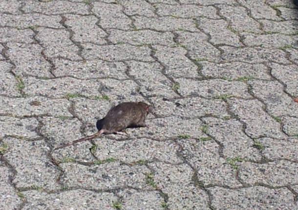 L'Arnetta tra topi e vegetazione (inserita in galleria)
