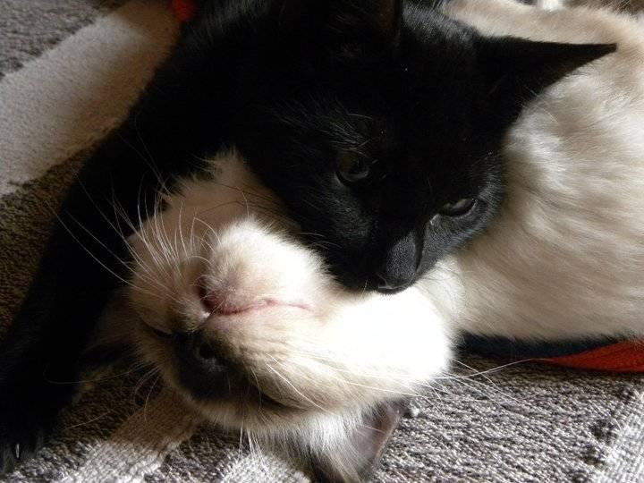 Nana & Samson (2)