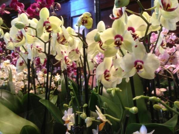 Orchidee da sogno a Varese (inserita in galleria)